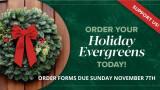 2021 Holiday Evergreens Info
